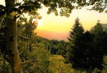 איך אנרגיה ירוקה מועילה לאיכות הסביבה בשנים הבאות?
